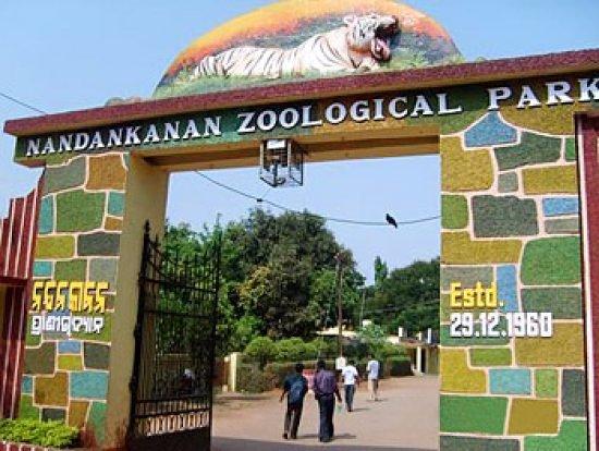 Nandankanan, Assamese macaques, wild dogs to enthral zoo visitors