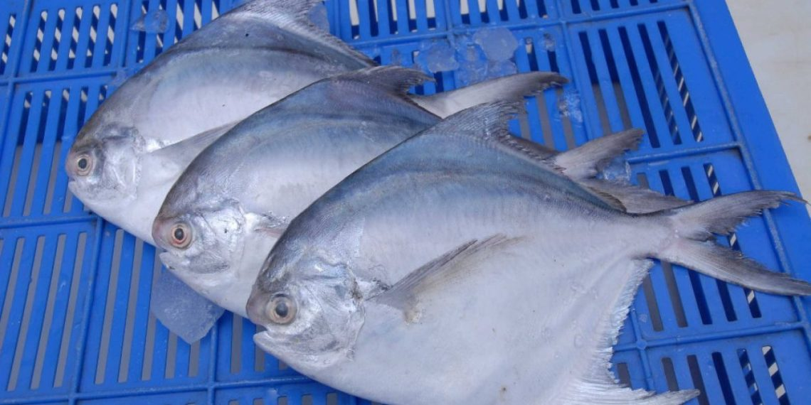 , Formalin in fish: BJD seeks Centre's intervention