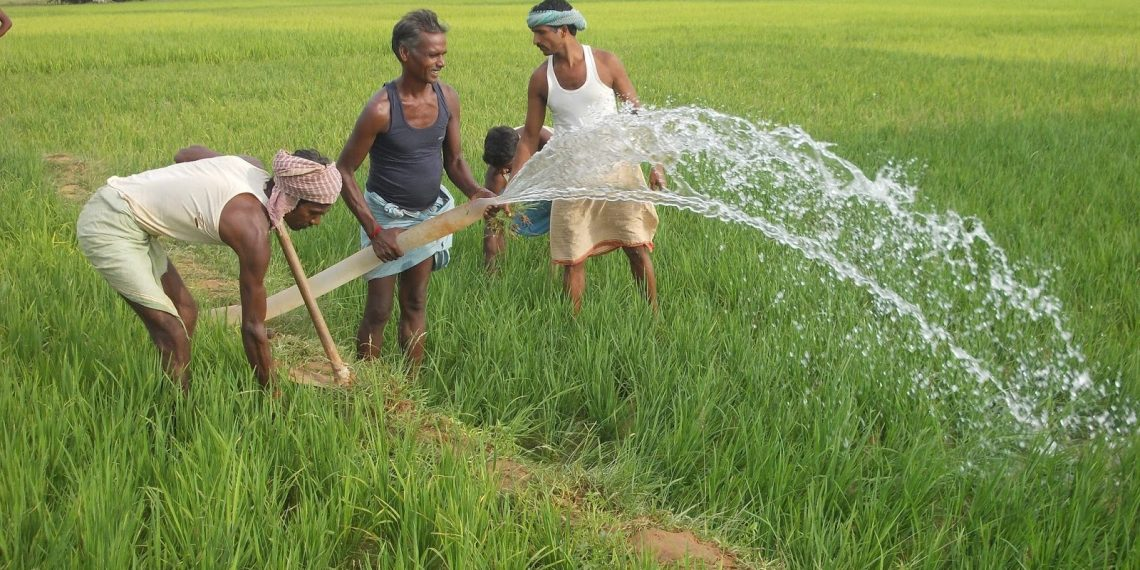 paddy MSP, Centre may hike paddy MSP by Rs 200/qtl