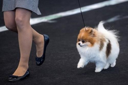 Virtual Pooch Could Help Prevent Dog Bites