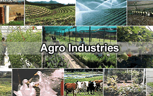 Hub, Odisha will be hub of agro & food processing in east: Official