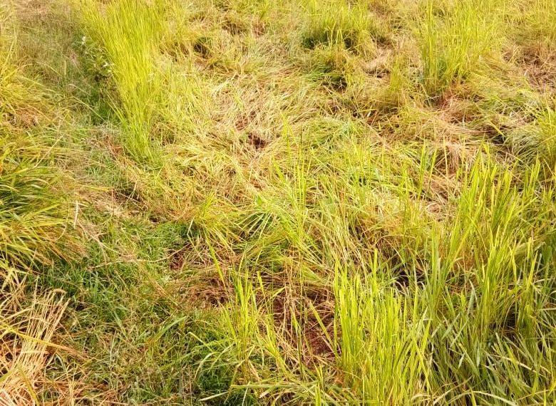 farmers, Farmers block NH over crop damage