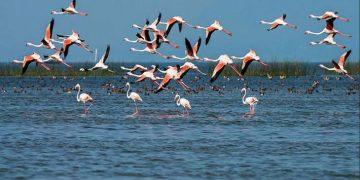 Hunting of migratory birds rampant at night in Chilika