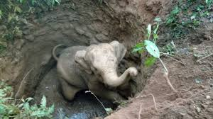 Jumbo calf trapped in well rescued