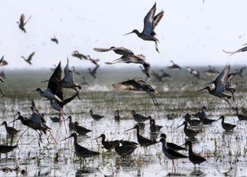 Poacher held for poaching migratory birds