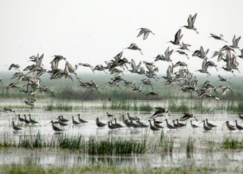 Annual bird census in Chilika to begin Jan 5, Dolphin census Jan 19
