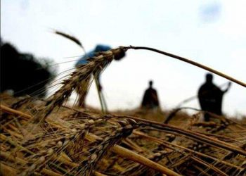 Farmer commits suicide over loan debt
