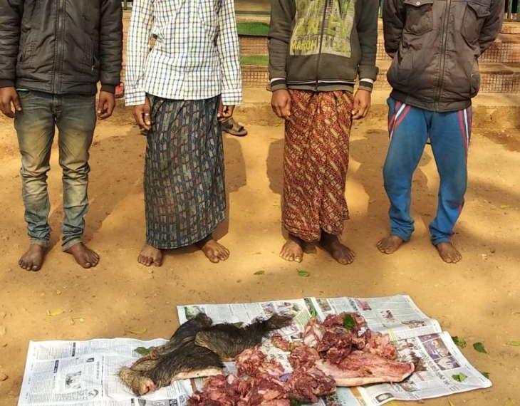 , 4 poachers held with 10 kg boar meat
