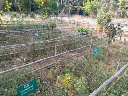 , Lack of upkeep ruins medicinal plant garden