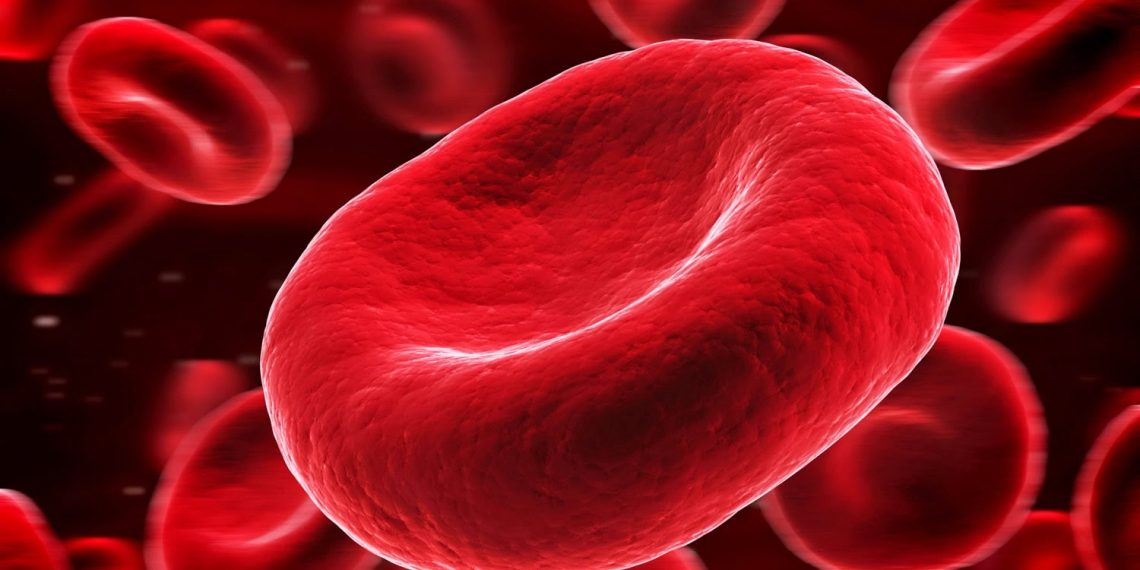 , Blood cells may hold key to 'fountain of youth'