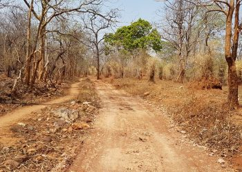 A kuchha road leading to  Kholibithar village in Nuapada district 	op photo