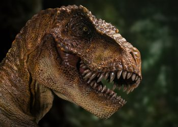 An exhibit featuring the dinosaur's bones is to open in May at the Royal Saskatchewan Museum.