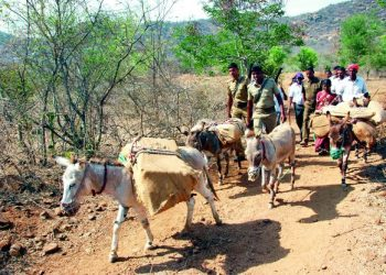 Donkeys carrying materials for elections is common sight in the region since 1977. (Image: DC)