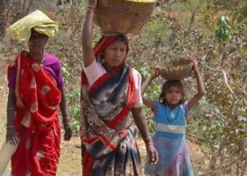 Forest dwellers seek fair price for mahua flowers