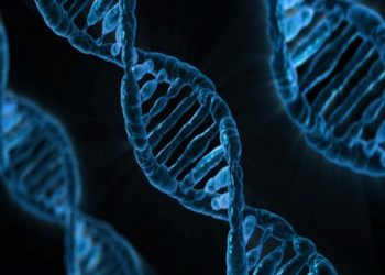 This gene could reduce inflammation after stroke