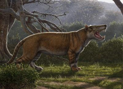 An artist's impression of the creature shows a giant big-cat-like hunter with stripey fur and enormous fangs. (Image: Mauricio Anton)