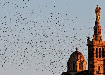 A flock of starlings fly over the Notre-Dame de la Garde Basilica on an autumn day at sunset in Marseille, France, November 4, 2015. Image: REUTERS
