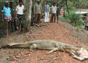 Boars, crocs poll issues in Rajnagar, Mahakalapada