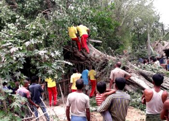 Fire department personnel (in yellow vests) and locals try to remove a huge tree Saturday which had been uprooted by cyclone Fani, Friday in Bhadrak