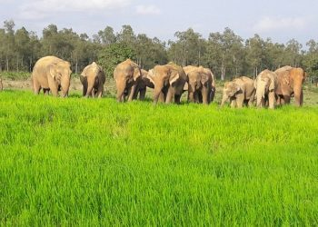 Death due to jumbo attack, NHRC moved