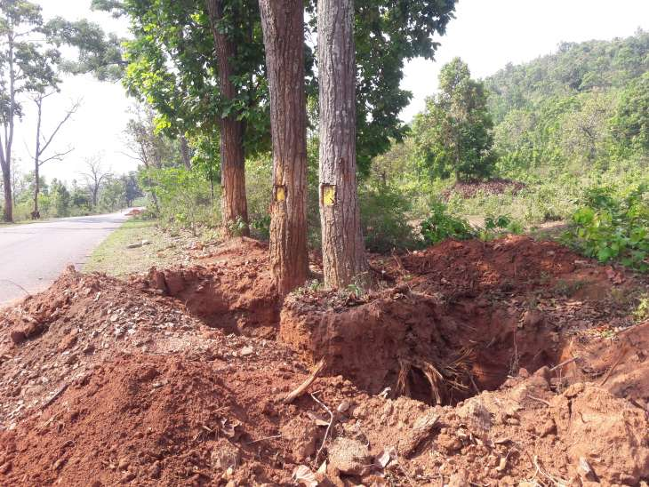 Locals fume as tree translocation gets delayed in Kandhamal