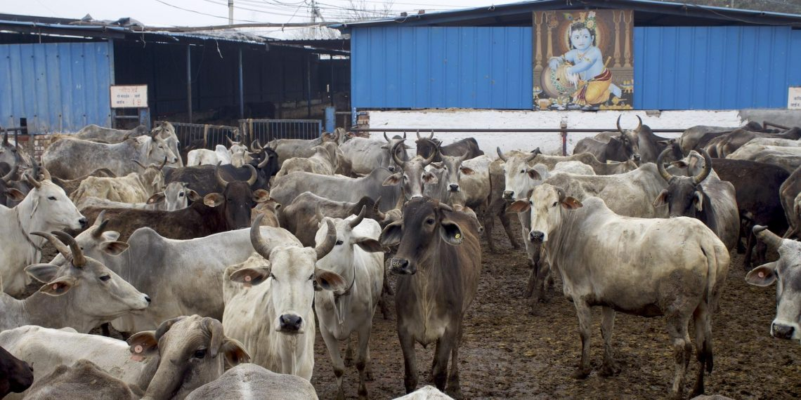Man held in Ayodhya for raping cows