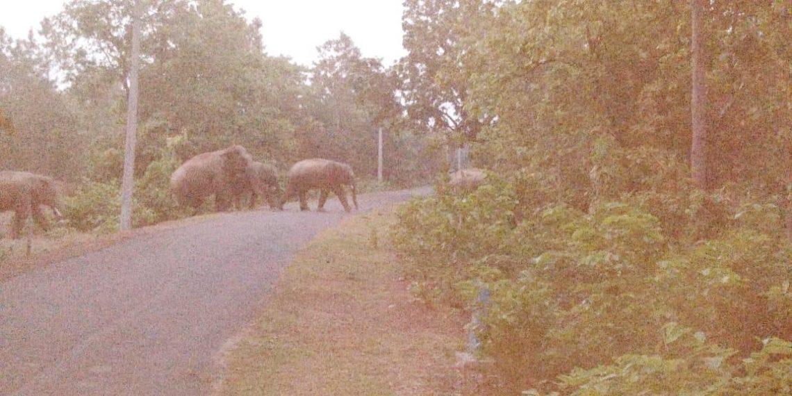 Jharkhand jumbos back in Nilgiri, people panicky