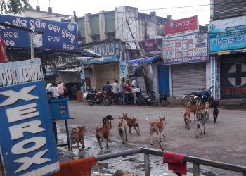 Stray dog menace in Silk City; sterilisation in backburner