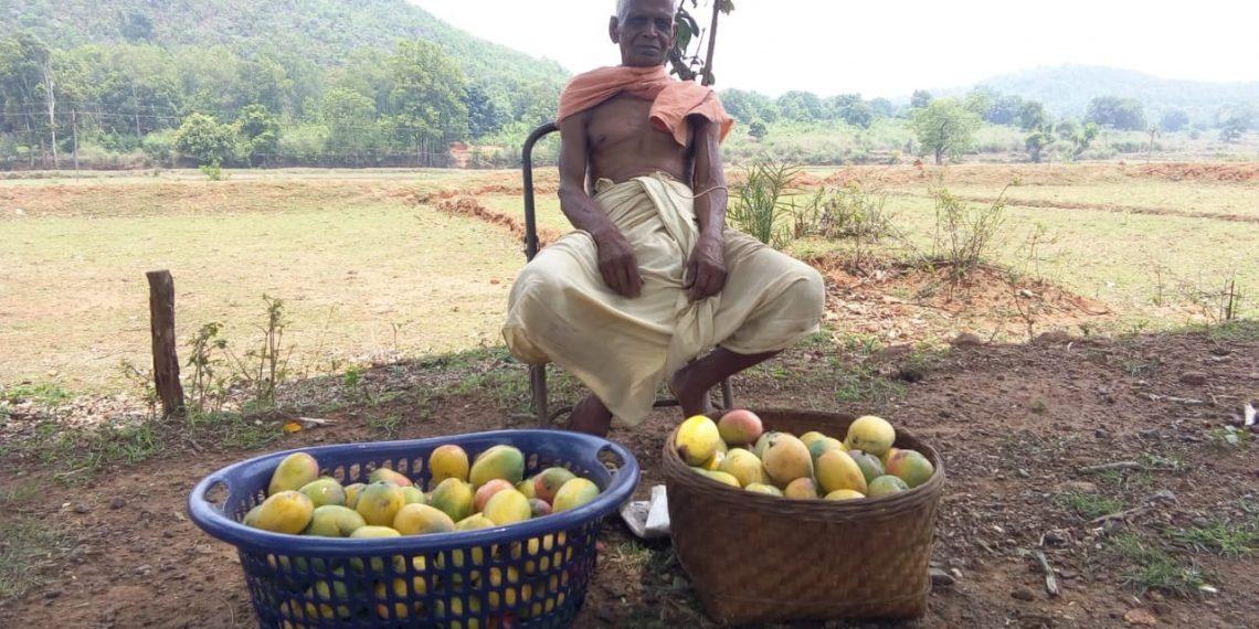 Water shortage hits farming in Kandhamal