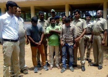 Cannabis seized in Champua