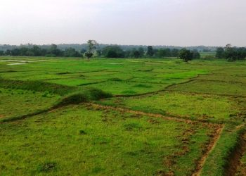 Inadequate rains hit paddy farmers in Keonjhar district
