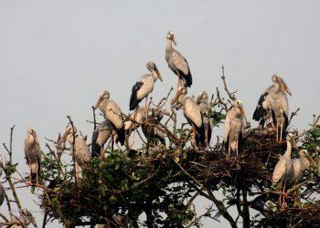 As rain plays truant, birds look away from Bhitarkanika