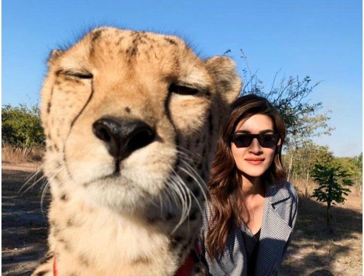 kriti-new-cheetah