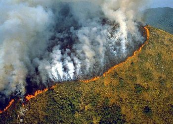 Amazon rainforest fires may be record setting: NASA