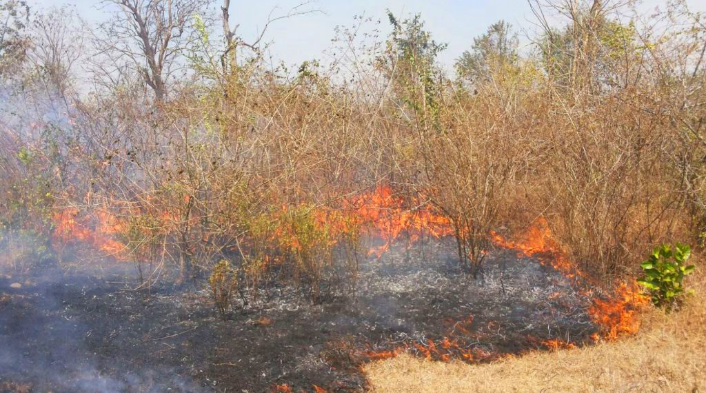 Bandipur fire in jungle
