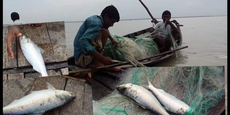 Fishermen worry as Hilsa export nosedives