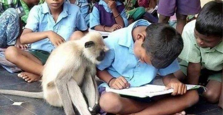 Unique school where a langur attends classes along with other students