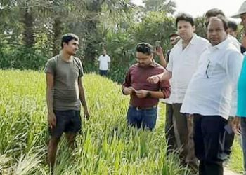 MLA, officials assess crop loss