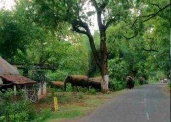Jumbo herd wreaks havoc in Balasore district