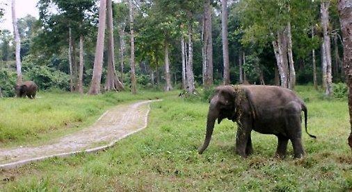 Jumbo, man-elephant conflict,
