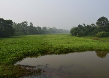 'Dead' river Sukapaika screams for revival