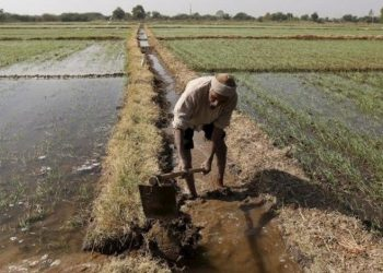 Amid slow economic growth, govt committed to doubling farmers' income by 2022