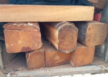 Illegal timber godowns raided in Bhadrak