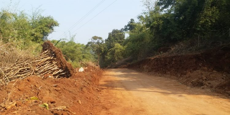 Trees being felled illegally to build road through Satkosia Sanctuary
