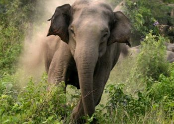 Jajpur Collector declares educational institution closed after jumbo kills two