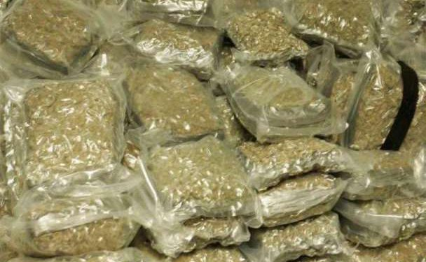 51kg cannabis seized in Ganjam, two arrested