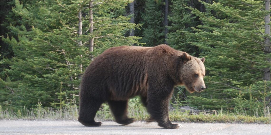 Man critically injured in bear attack
