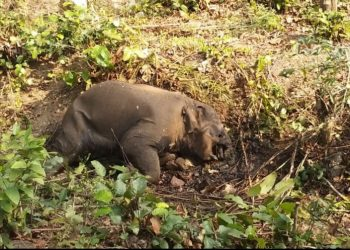Tusker carcass recovered in Sambalpur dist