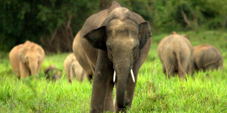 Elephants damage eight houses
