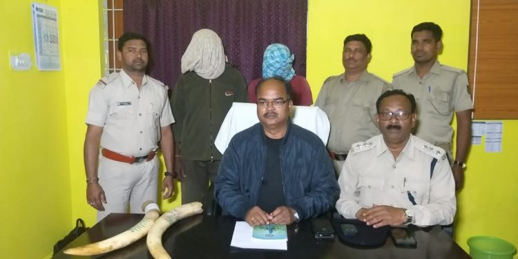 Two smugglers arrested, tusks recovered in Subarnapur